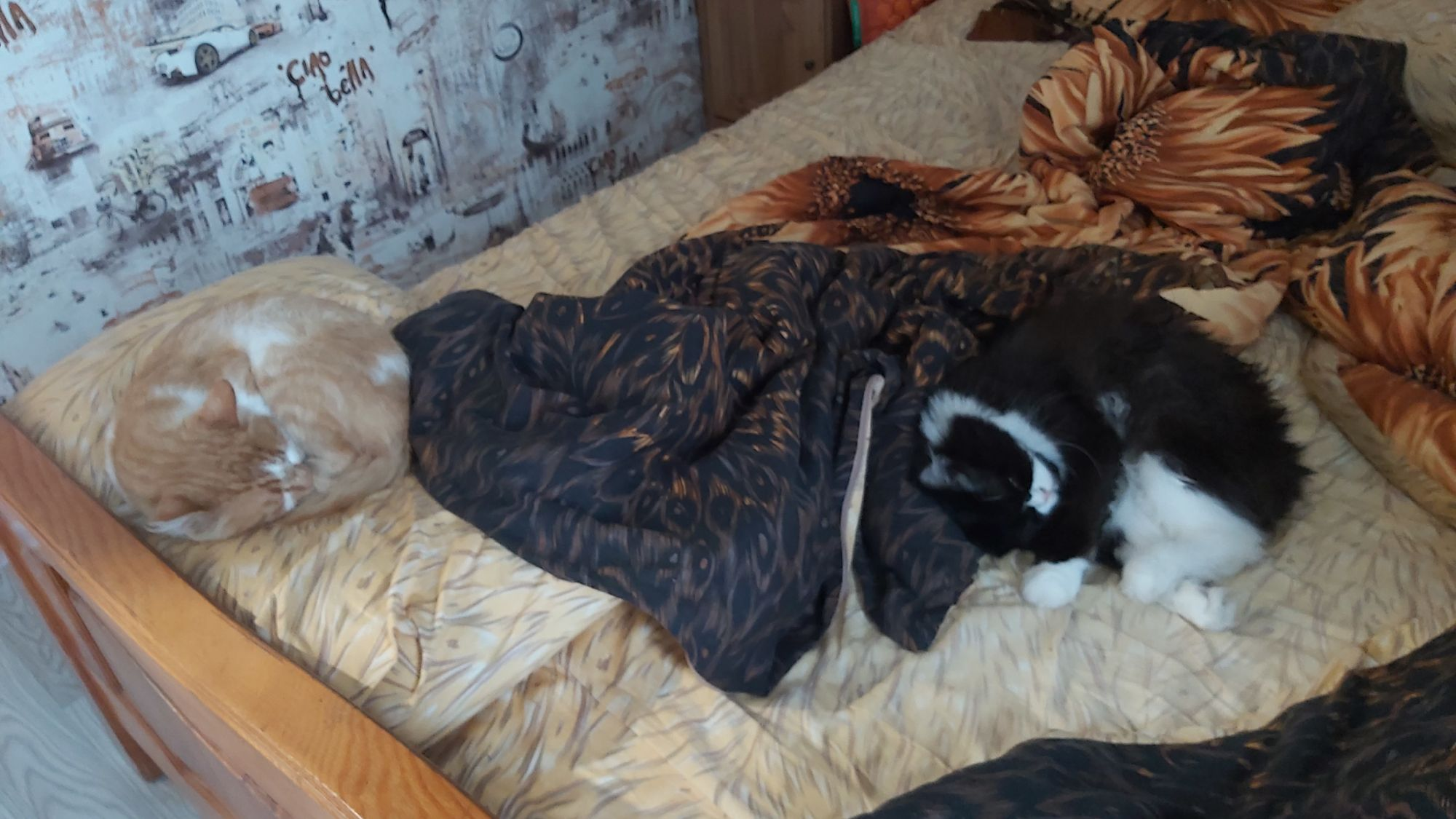Ты хочешь заправить кровать... но как прогнать шерстяных? Сладких шерстяных?  Типа - эээ, коты, вставайте! Это Наташа,  я там все уронила!
