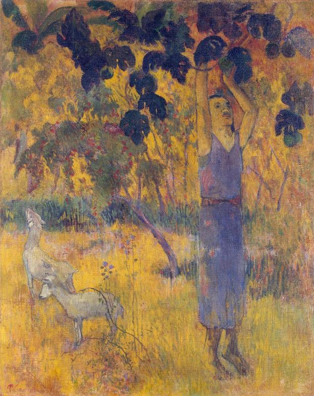 Поль Гоген Мужчина, собирающий плоды с дерева