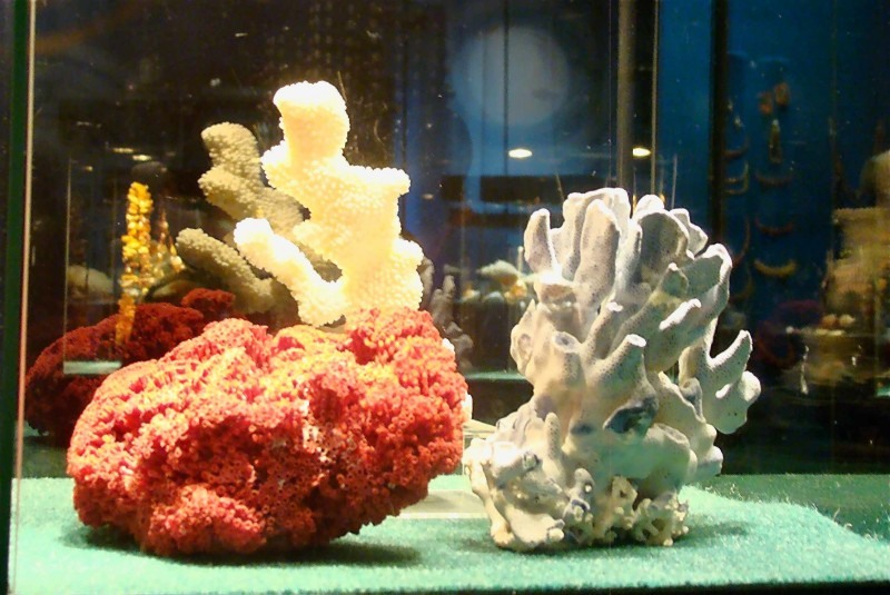 КЖБ коралл