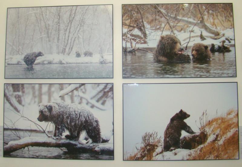 Курильские медведи