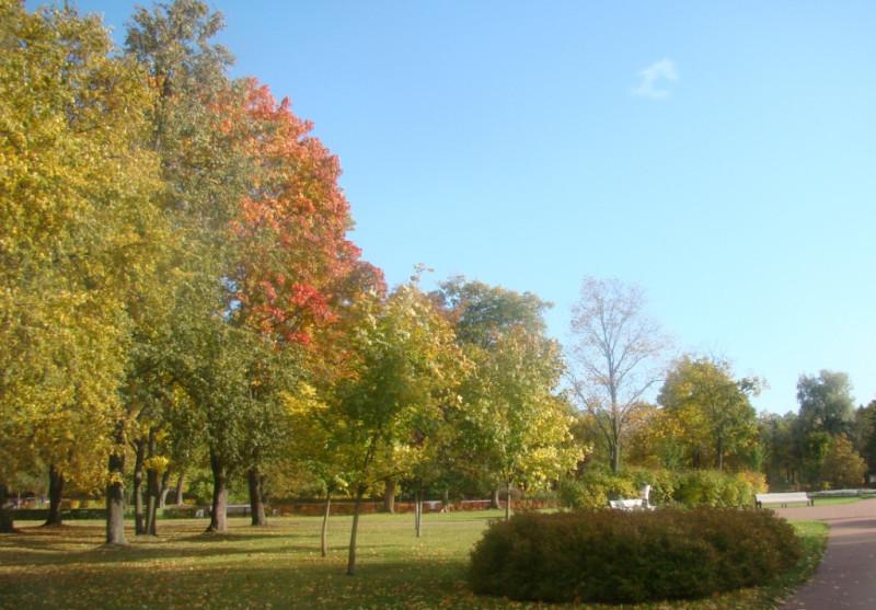 Парк на Дворцовой