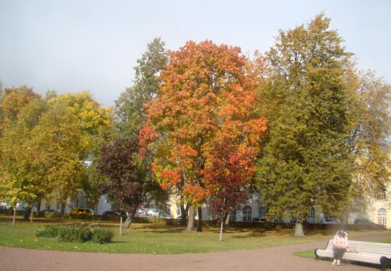 Парк у дворца