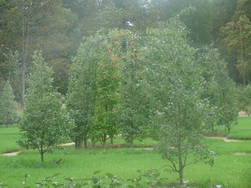 Плодовый топиарный сад парк Монрепо
