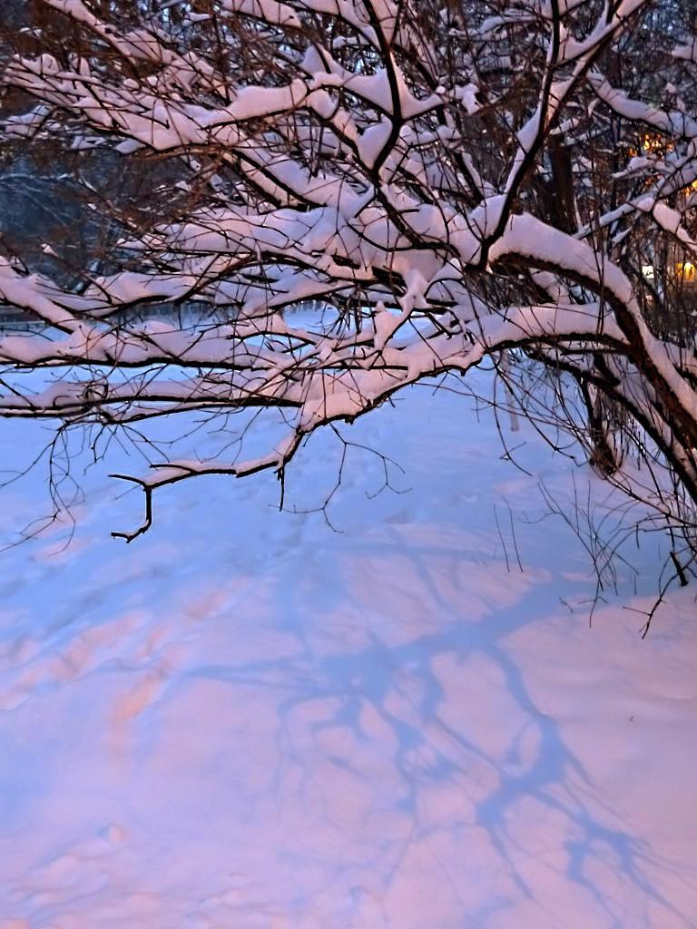 тени на снегу-1