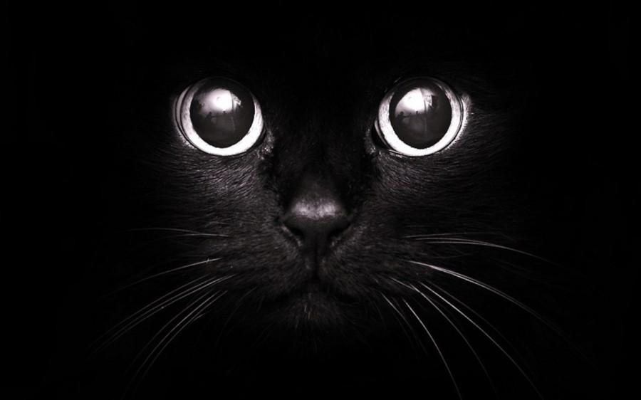 1355861026_black_cat-946162872