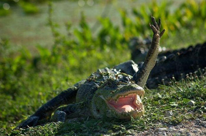 Крокодил Федя