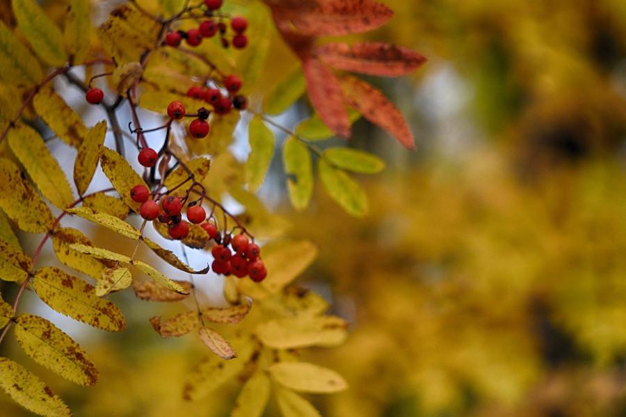 Осень в Орле