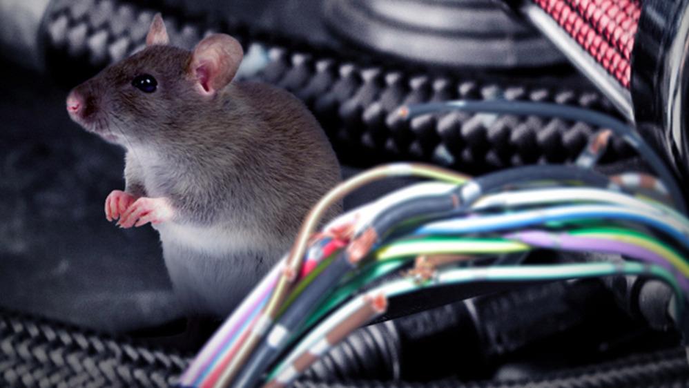 Мыши и провода
