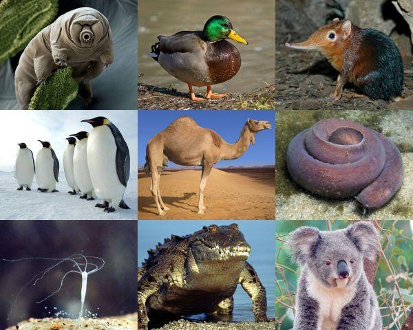 Уникальные свойства животных