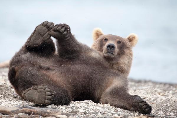 картинки прикольные медведи