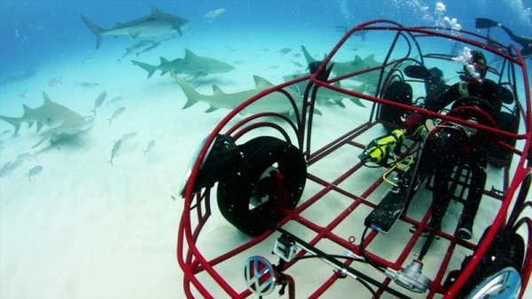 Beetle Shark Cage