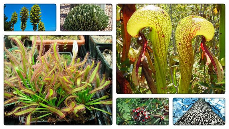 Растения убийцы