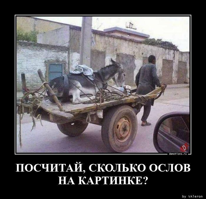 1598261814_POSChITAY-SKOLKO-OSL.jpg