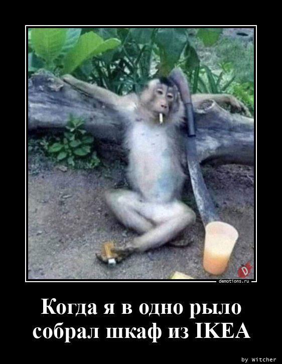 1602365664_Kogda-ya-v-odno-rylo.jpg