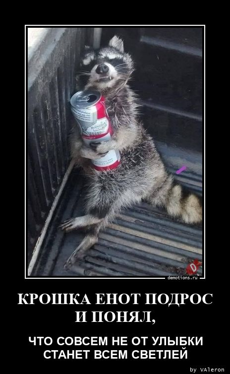 1602114289_KROShKA-ENOT-PODROS-.jpg