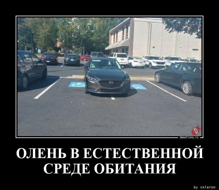 1604882398_OLEN-V-ESTESTVENNOY-.jpg