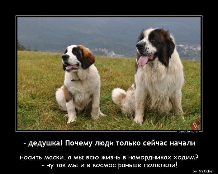 1605283520_-dedushka-Pochemu-ly.jpg