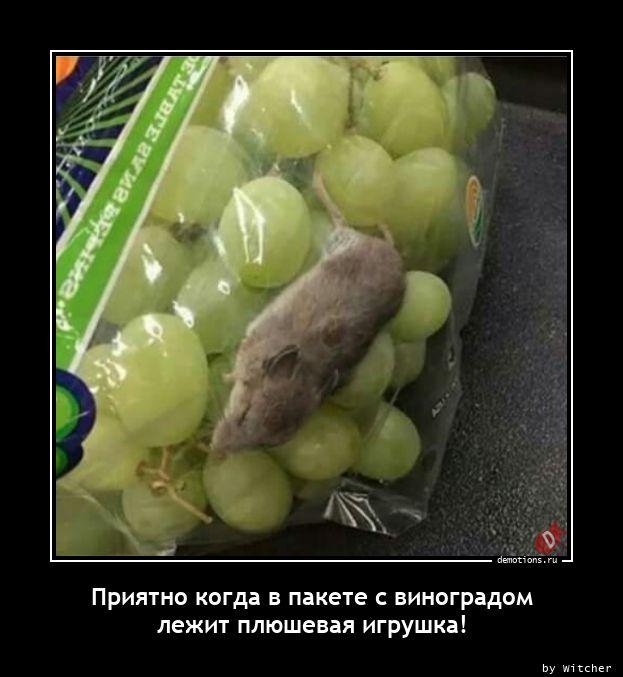 1605024254_Priyatno-kogda-v-pak.jpg