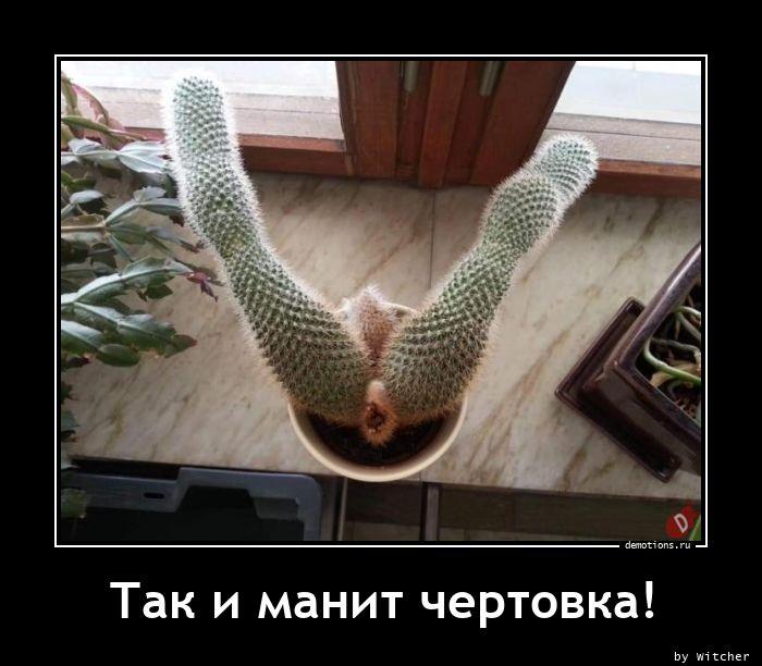 1605774967_Tak-i-manit-chertovk.jpg