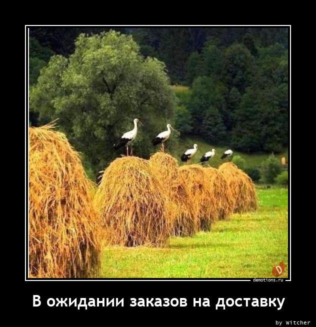 1605686871_V-ozhidanii-zakazov-.jpg