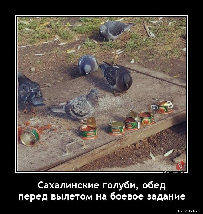 1606210628_Sahalinskie-golubi-o.jpg