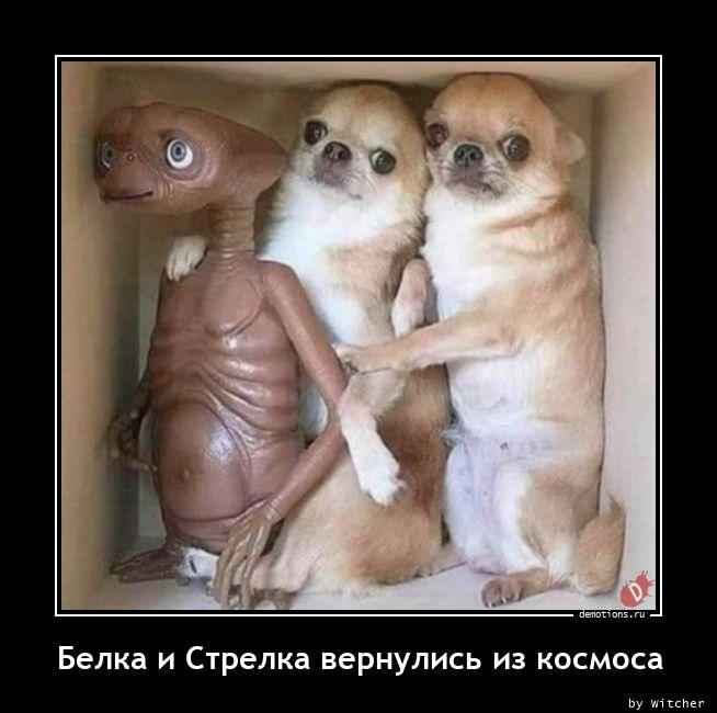 1613639341_Belka-i-Strelka-vern.jpg