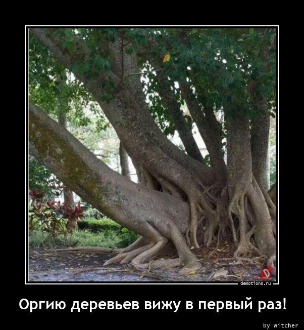 1613747751_Orgiyu-derevev-vizhu.jpg