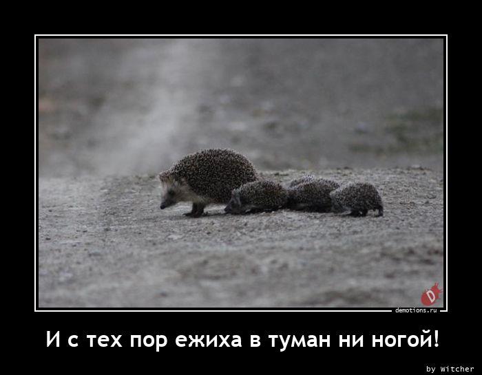 1614439293_I-s-teh-por-ezhiha-v.jpg