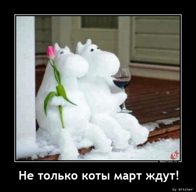 1614942735_Ne-tolko-koty-mart-z.jpg