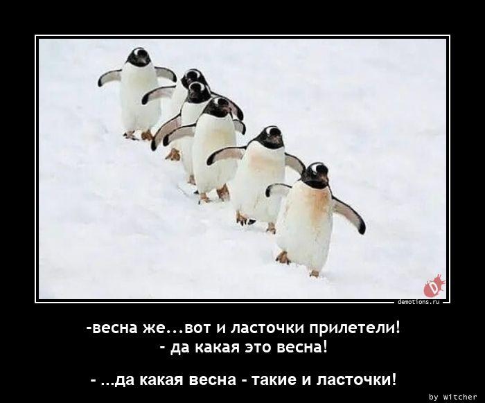 1615114129_-vesna-zhe.vot-i-las.jpg