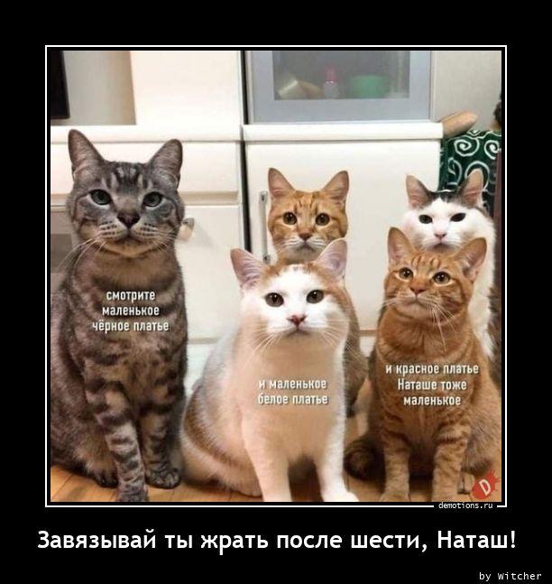 1616304471_Zavyazyvay-ty-zhrat-.jpg