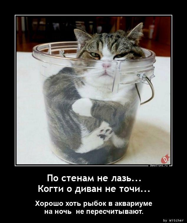 1615974654_Po-stenam-ne-laz.-Ko.jpg
