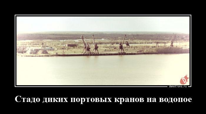 1617280093_Stado-dikih-portovyh.jpg
