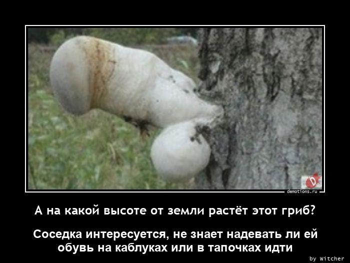 1618727367_A-na-kakoy-vysote-ot.jpg