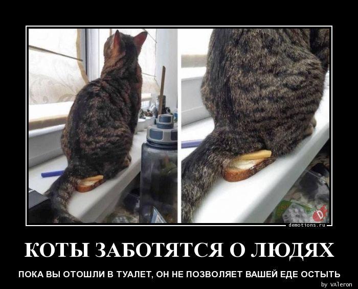 1587605442_KOTY-ZABOTYaTSYa-O-L.jpg