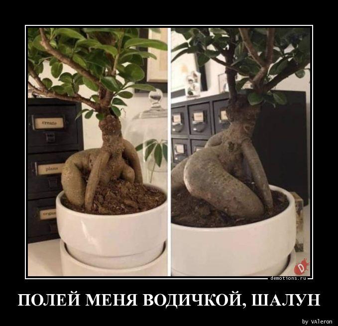 1584926745_POLEY-MENYa-VODIChKO.jpg