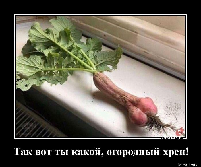 1584693536_Tak-vot-ty-kakoy-ogo.jpg