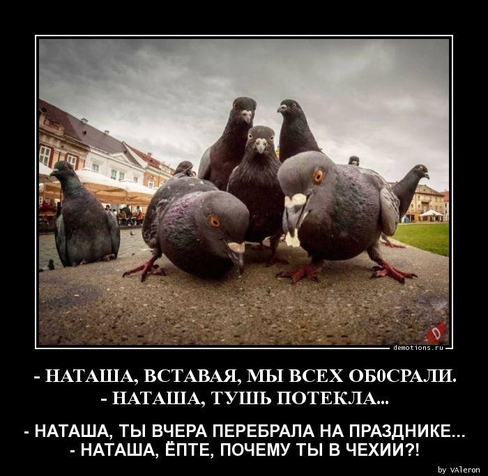 1589171646_-NATAShA-VSTAVAYa-MY.jpg