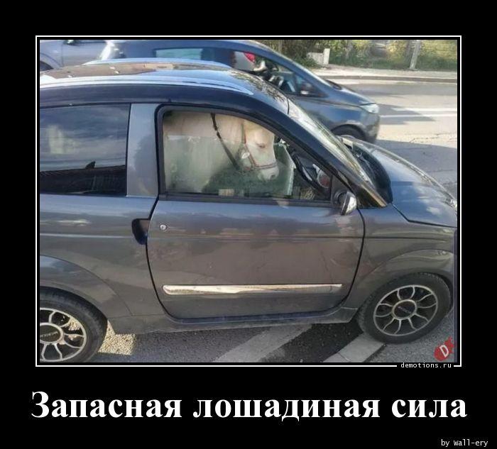 1584520172_Zapasnaya-loshadinay.jpg