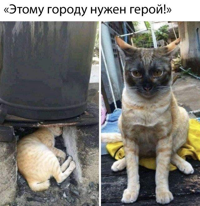 1589396531_podborka-35.jpg
