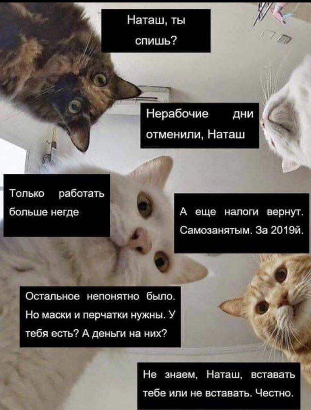 1589365289_humor-2.jpg