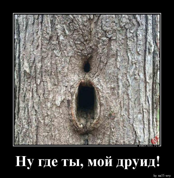 1588786793_Nu-gde-ty-moy-druid.jpg