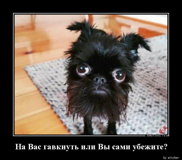 1589385258_Na-Vas-gavknut-ili-V.jpg