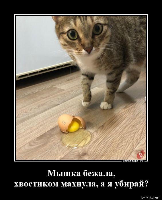 1590939174_Myshka-bezhala-hvost.jpg