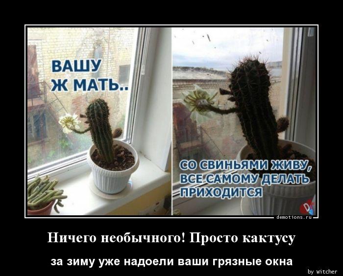 1590827537_Nichego-neobychnogo-.jpg