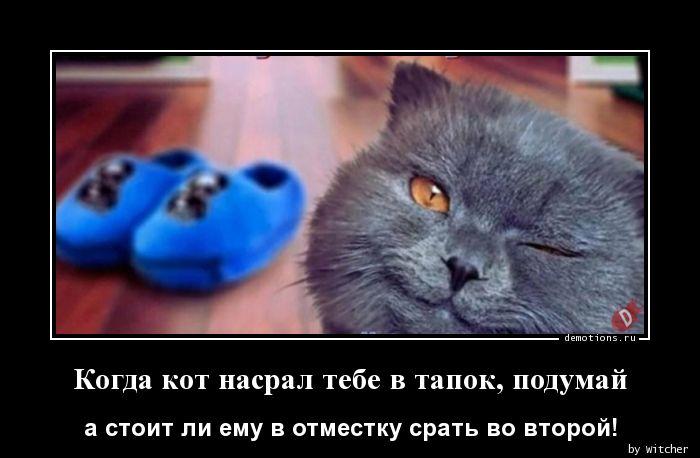 1590817191_Kogda-kot-nasral-teb.jpg