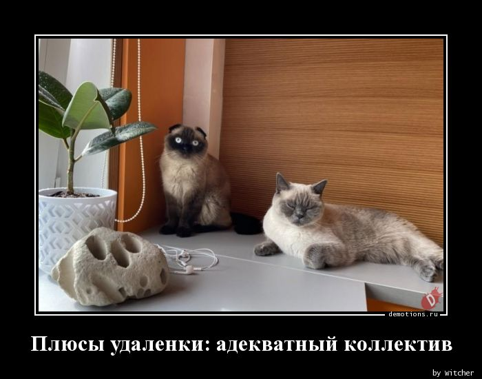 1592203380_Plyusy-udalenki-adek.jpg