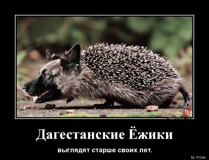 1592869153_Dagestanskie-Ezhiki.jpg
