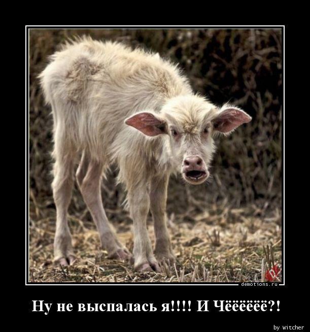 1592830355_Nu-ne-vyspalas-ya-I-.jpg