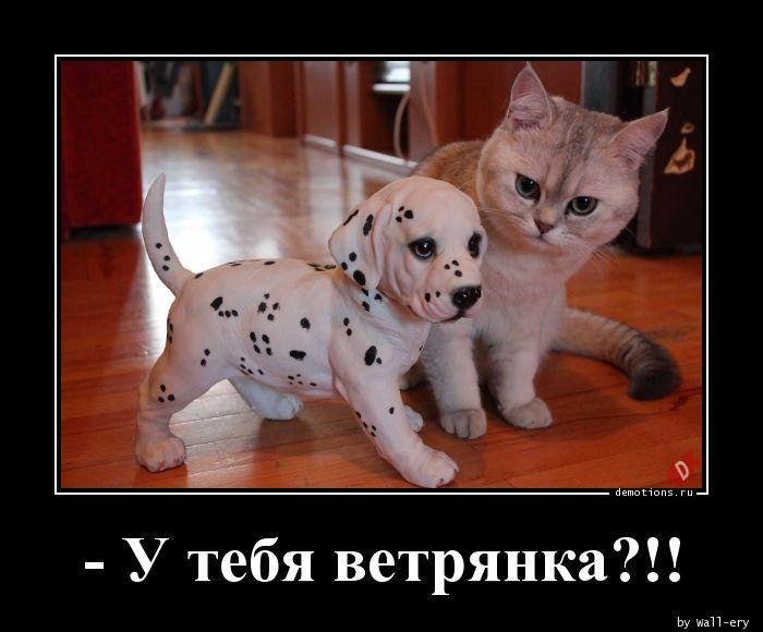 1593588812_-U-tebya-vetryanka.jpg